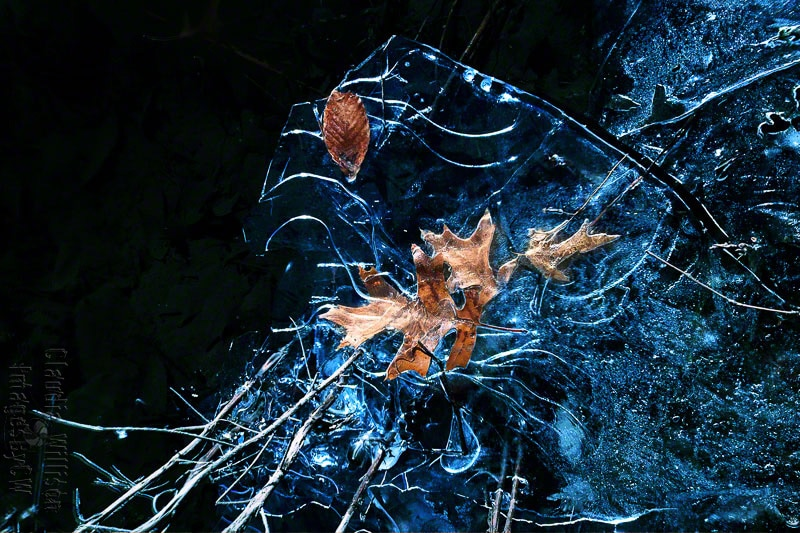 leaf, leaves, ice