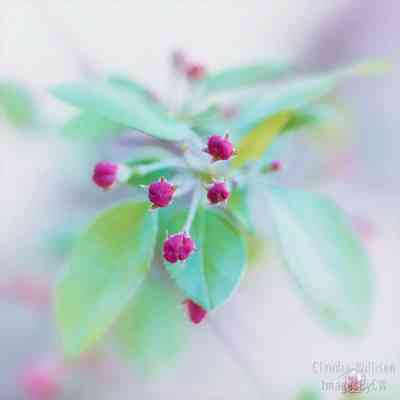 spring, tree, buds