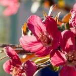 pink, bloom, spring