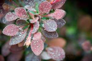 dew, drops, leaves, leaf
