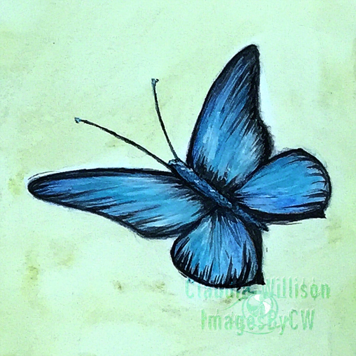 butterfly, painting, blue