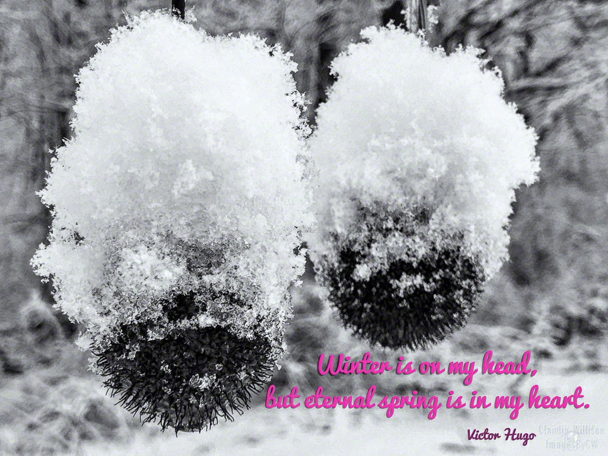 snow quote winter
