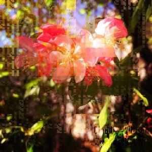 spring, flower, blossom, pink