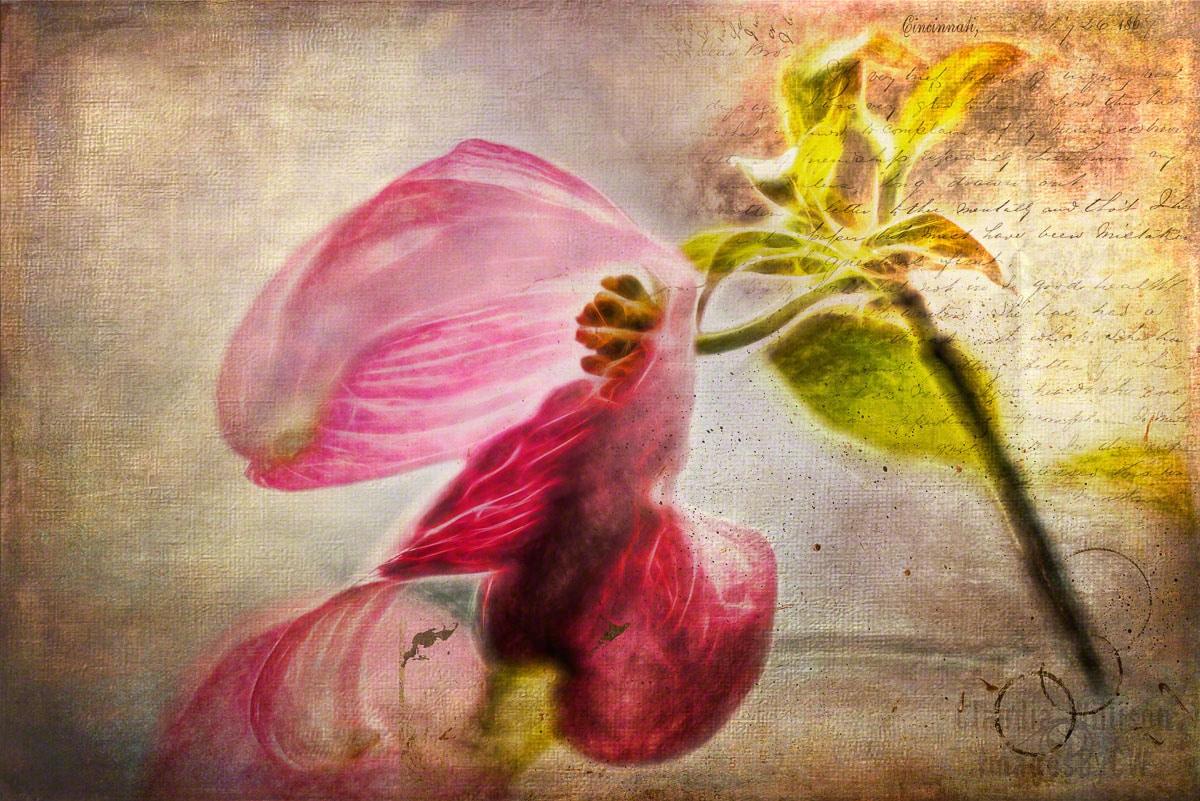 flower, art, photo