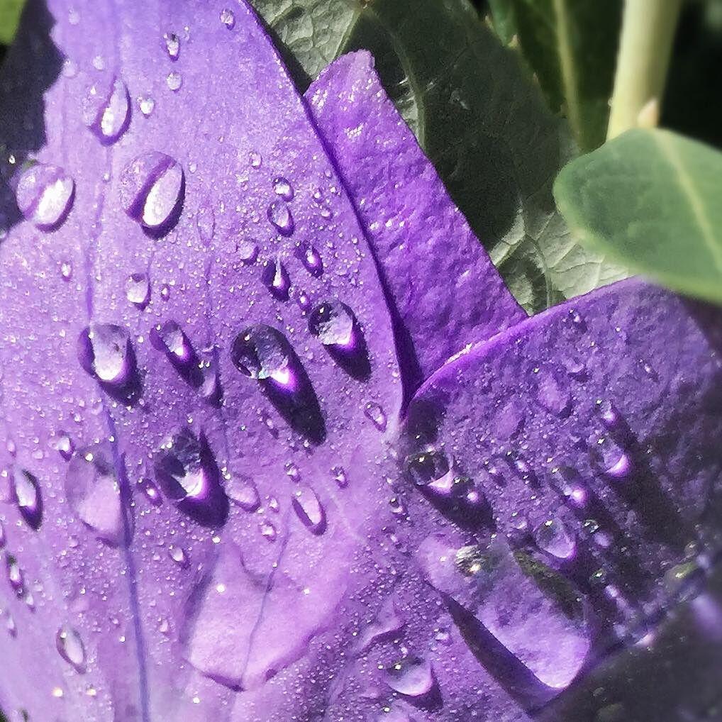 raindrops beauty