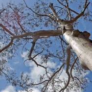 a tree in revival after bush fire