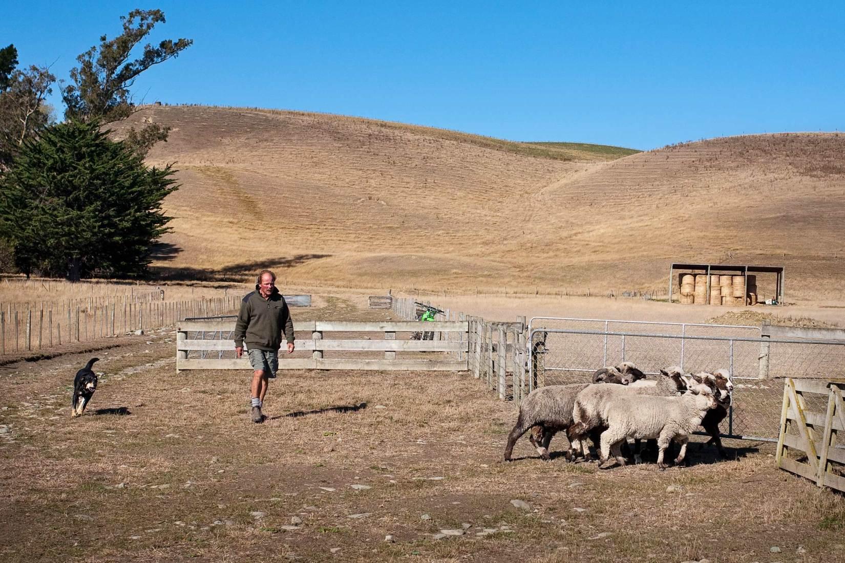 10014-0514-Image-Workshop-Melbourne-photographer-New-Zealand-merino-farm-sheep-farmer