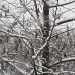 Nieve (preciosa estampa la de ayer….)