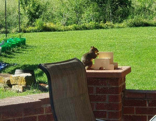 Squirrel Table Kit