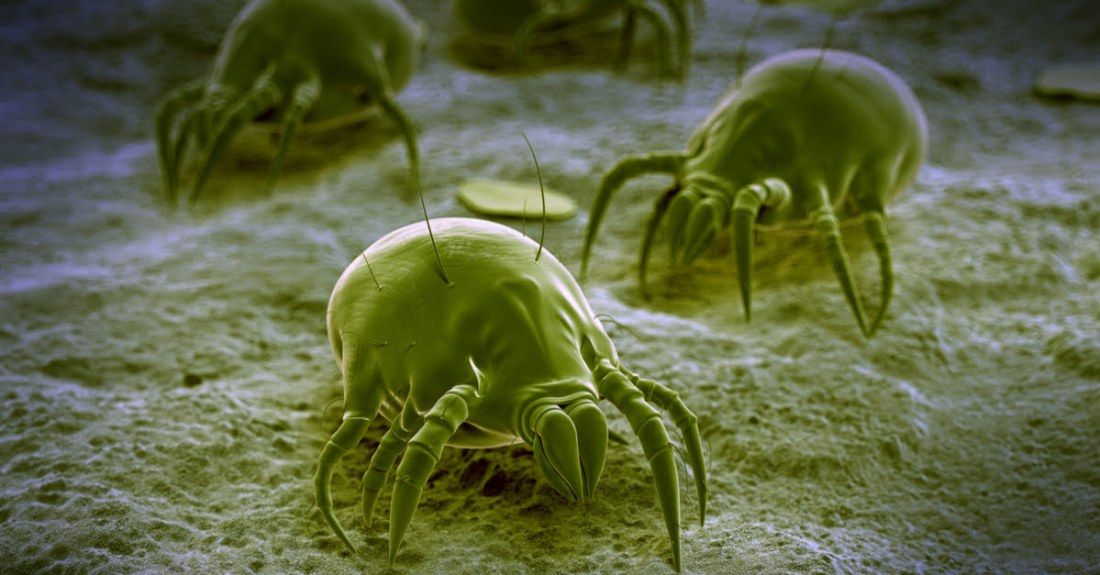 how-to-get-rid-of-dust-mites-1