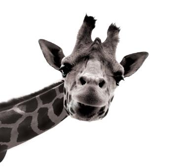 Girafe Imaginer demain