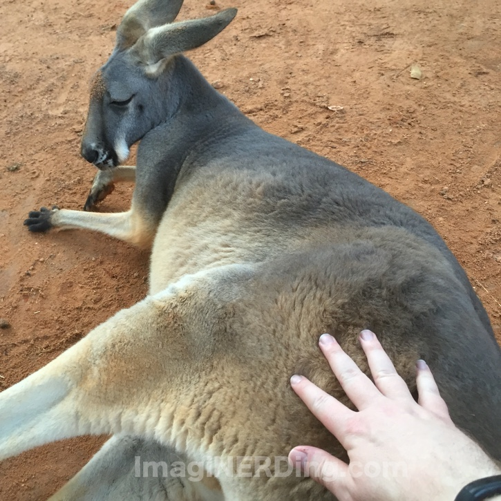 touching-kangaroobusch-gardens