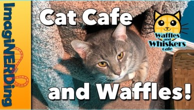 waffles and whiskers cat cafe