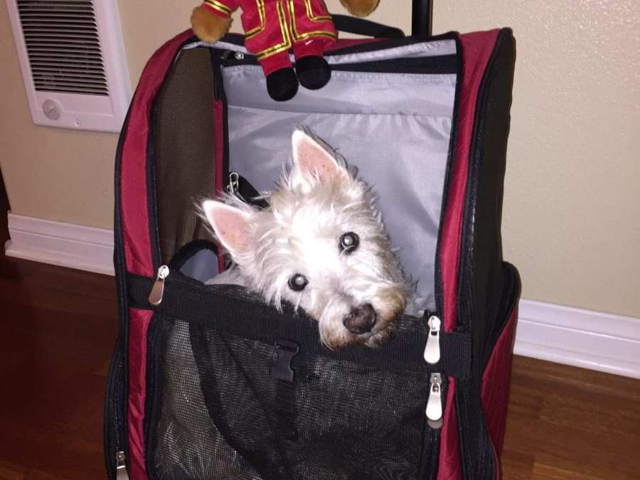 How Do You Bring a Dog To Europe/UK?