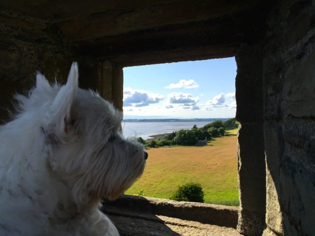 Bella is Hanging On the Isle of Wight With the Wild Life!