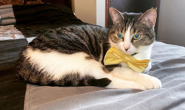Connor Burgess cat