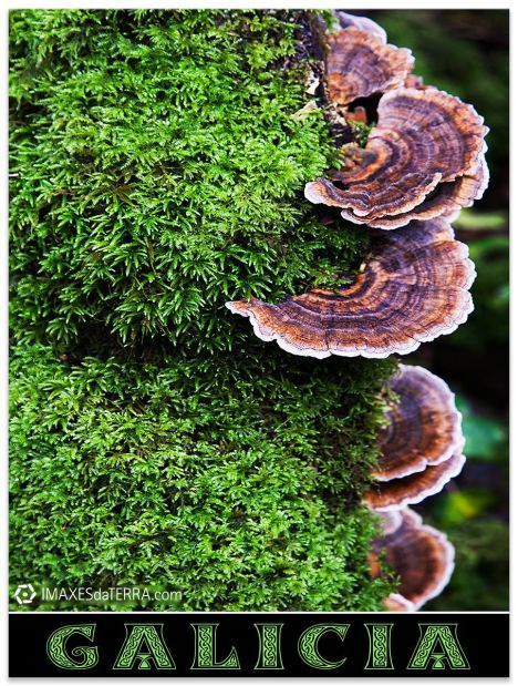 Comprar fotografía paisajes de Galicia Naturaleza Decoración
