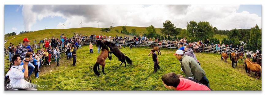 Rapa das Bestas de Candaoso en Viveiro,  Comprar fotografía de Galicia Fiestas de Galicia Rapa das Estas Candaoso Viveiro Verano San Andrés de Boimente Decoración