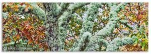 Carballos en  Rabade, Comprar fotografa  paisaxes de Galicia  Carballos Parque Natural  do  Invernadeiro Ourense Natureza Decoración