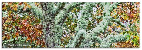 Comprar fotografía paisajes de Galicia Carballos Parque Natural do Invernadeiro Ourense Naturaleza Decoración