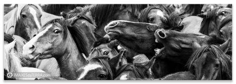 Rapa das Bestas ,  fotografía Festas de Galicia Rapa das Bestas cabalos Decoración natureza