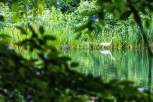Saturday evening- Great Egret on Turtle Pond