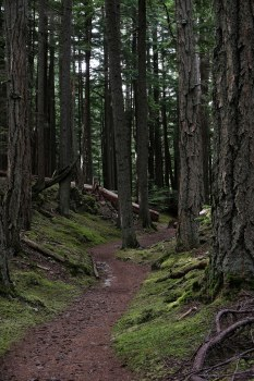 Through the forest, Mt Constitution