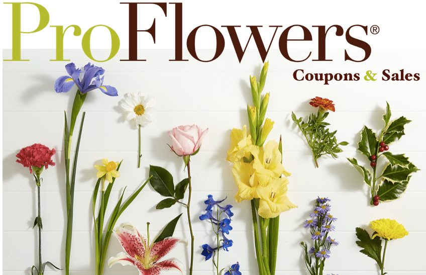 40% Off ProFlowers Promo Code September 2020 – Coupon & Sales at Pro Flowers