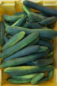 pCucumbers-size1