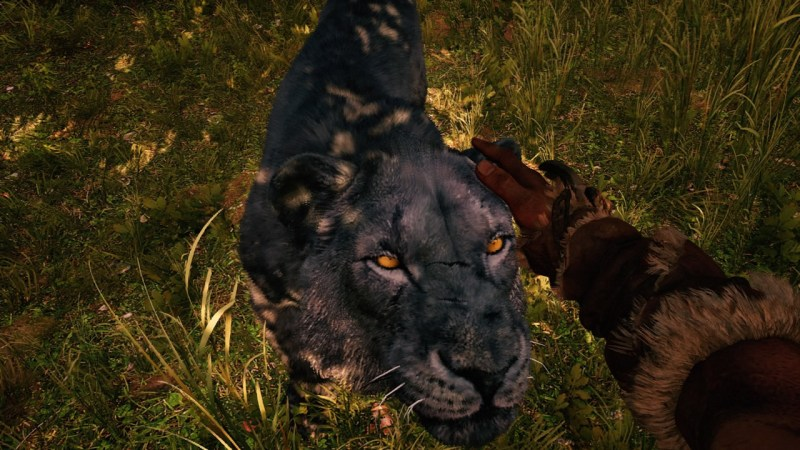Un lion apprivoisé