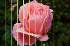 Фотография с наложенными вертикальными полосами на одинаковом расстоянии друг от друга