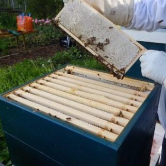 De honingkamer is tot de rand toe gevuld