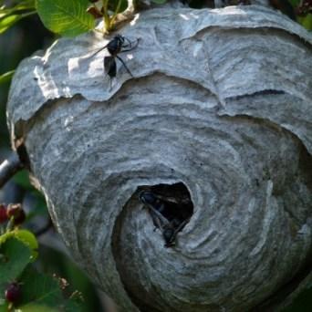 Dit is een wespennest