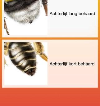 Bijen Safari