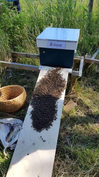 Met het inlopen wordt Bijenstand Schoteroog geopend