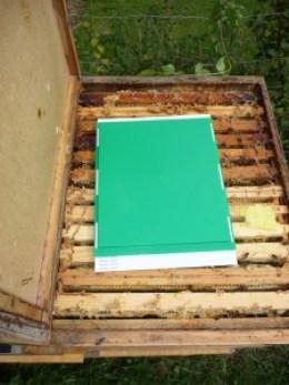 Varroabekämpfung mit Schwammtuchmethode