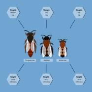 Bienen, Bienenwesen,Drohne, Bienenkönigin, Arbeitsbiene