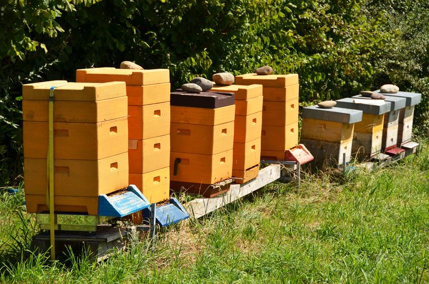 Bienenbeute. Alles Rund um Bienenbeuten erfahren.