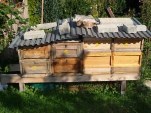 Bienenbeuten, Bienenbeuten arten Holz