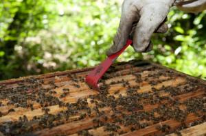 Schwarmstimmung verhindern, Bienenschwarm verhindern
