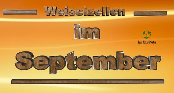 Weiselzellen im September, Weiselzelle im September