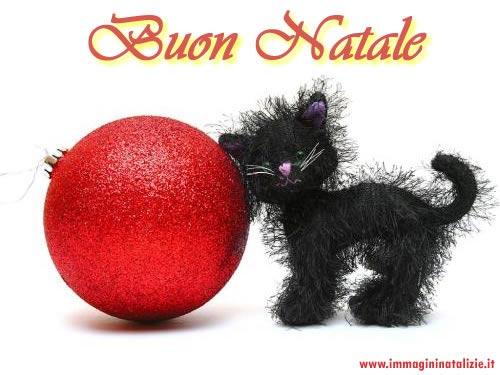 Foto di Natale gattino