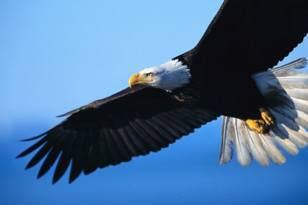 On Eagles Wings 1