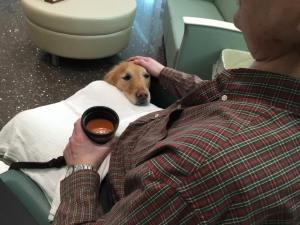 In Memory of Jackson Comfort Dog 2