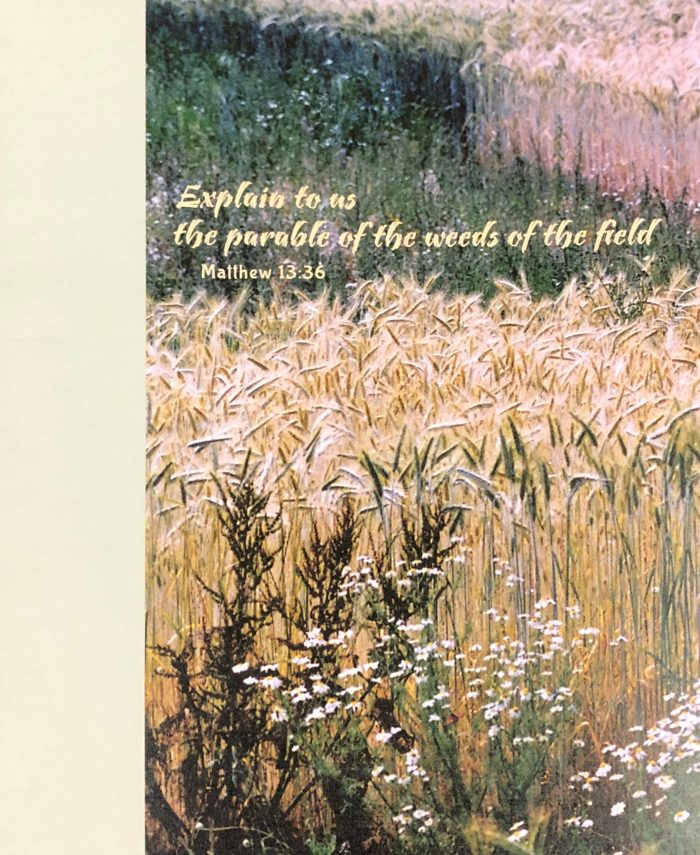 Explain to us the parable of the weeds of the field. Matthew 13 36. Seventh Sunday after Pentecost. Immanuel Lutheran Church LCMS. Joplin, Missouri. bulletin cover.