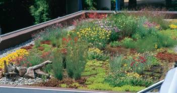 Dachbegrünungen bieten ökologische Vorteile für die Umwelt und verbessern die Gebäude-Energie-Bilanz. - © Deutsche Bundesstiftung Umwelt