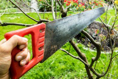 Bäume auf Grundstücksgrenze – Rechtsgrundlagen/Kapprecht