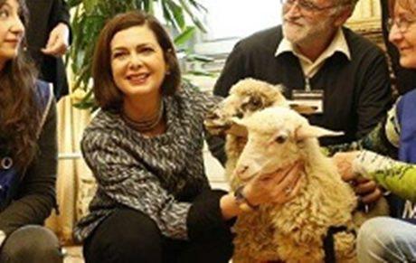 Boldrini Polemizza Sulle Pecore Io Le Ho Adottate Davvero