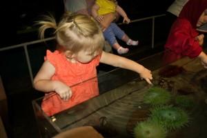 3. Aquarium (9)-2