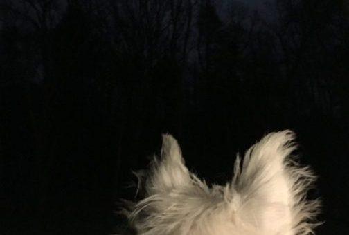 Artie vs. The Moon